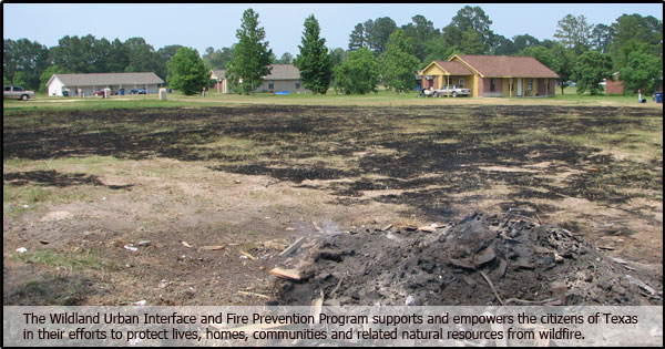 texas aampm forest service