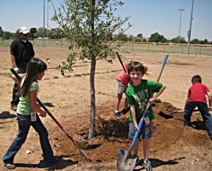 benefits of planting trees essay