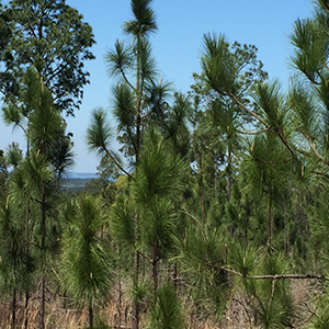 <p>A