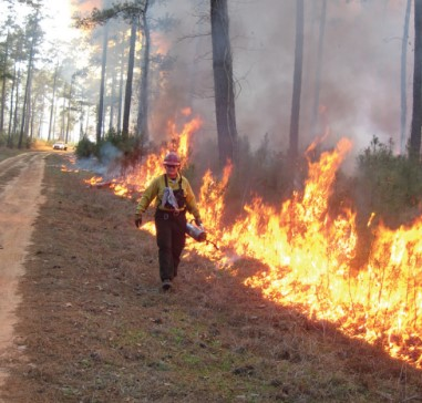Now through September 30, 2019, Texas A&M Forest Service is accepting grant applications to reimburse landowners for the costs of having a prescribed burn conducted on their property by certified and insured prescribed burn mangers. Last year the programs were utilized for over 13,500 acres of treatments.