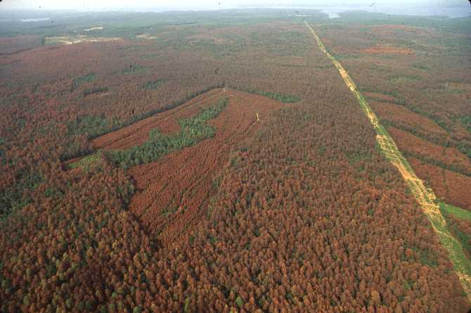 Funds available for forest thinning through Southern Pine Beetle Prevention Program