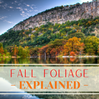 Fall Foliage - Explained