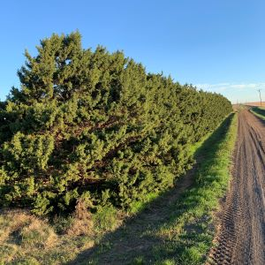 Texas A&M Forest Service is now accepting grant applications from landowners in the high plains region of Texas who construct vegetative fuel breaks on their property.
