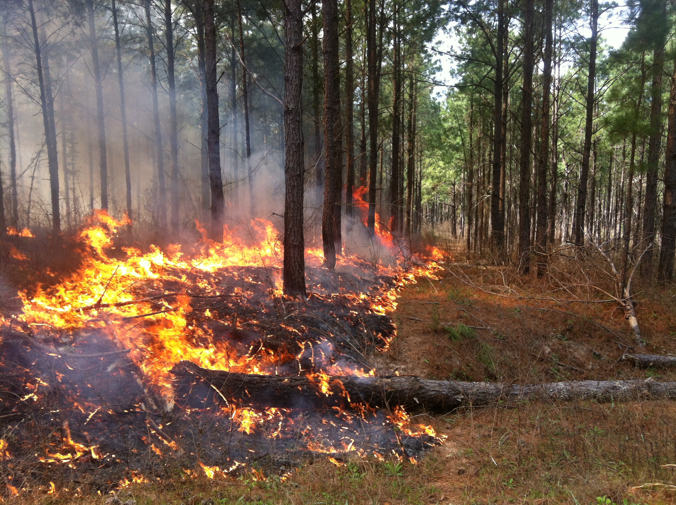 <p>Some Texas landowners may be eligible to be reimbursed for their cost of prescribed burning. 
