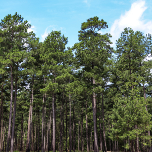 Annual workshop to assist forest landowners with 2019 tax preparation