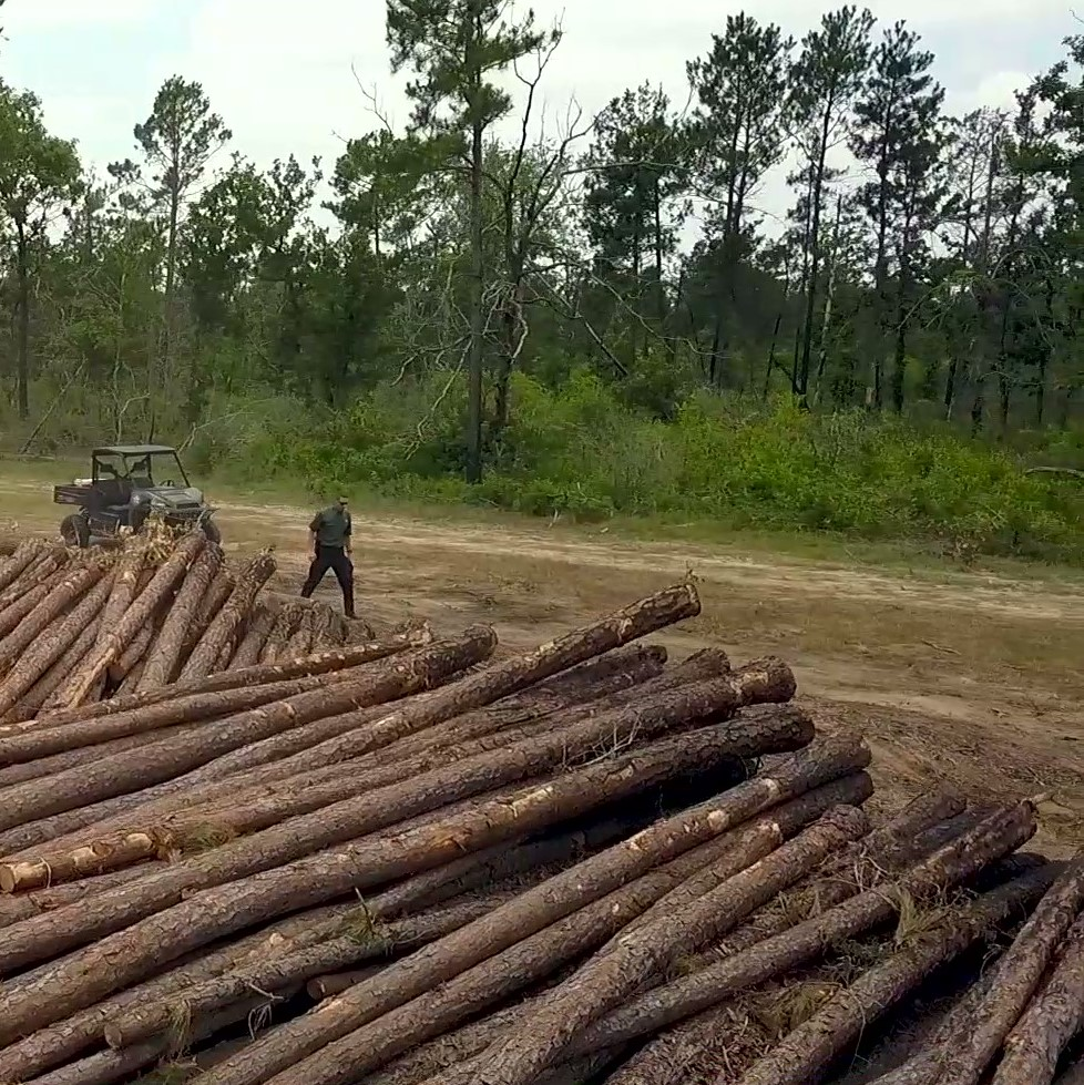 Timber Fraud in Jasper County