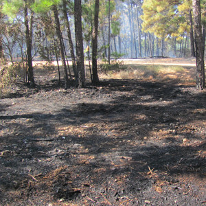 Wildfire thwarted by county preparations