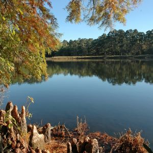 Half of the fresh water produced in Texas comes from forested lands. So on this National Arbor Day, when the nation and much of the world are celebrating trees and the many benefits they provide, Texas A&M Forest Service is focusing on the connection between forests and drinking water.