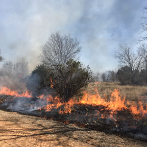 Applications for Prescribed Fire Grant now open