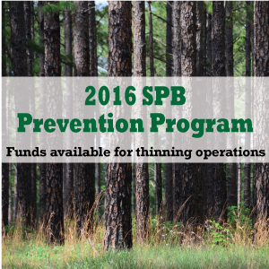 <p>  April 19, 2016 — COLLEGE STATION, Texas — Texas A&amp;M Forest Service is accepting applications for the 2016 Southern Pine Beetle Prevention Program. Through this cost-share program eligible forest landowners can receive financial and technical assistance related to reducing the threat of future SPB infestations and</p>