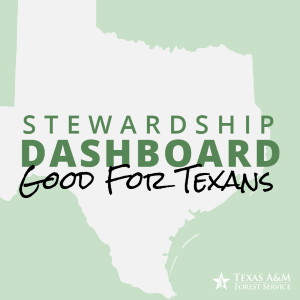 How valuable is it to actively manage your forestland? Landowners can now explore the added financial and environmental benefits of land management through the Texas A&M Forest Service Forest Stewardship Dashboard.