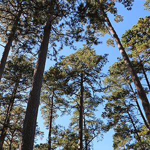 Tax season is fast approaching and forest landowners may want to refresh their knowledge of timber tax laws. The 2019 Texas Timber Income and Property Tax Workshop will be held on February 11 from 8 am to 5 pm at the Civic Center in Diboll, Texas.