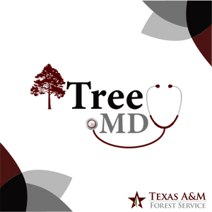 Texas A&M Forest Service launched an application today to help users quickly identify the root of a tree's problem, whether it be caused by insects, diseases or other factors.