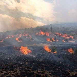 Wind-driven wildfire in Jeff Davis County contained by Texas A&M Forest Service