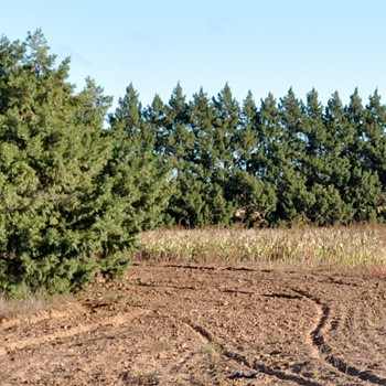 Landowners in the high plains region of Texas may be eligible for funding that would assist in the creation of vegetative fuel breaks on private lands. Through Dec. 20, 2019, Texas A&M Forest Service will be accepting grant applications.