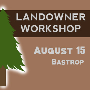 Texas A&M Forest Service to host workshop on re-establishing landscape in Bastrop