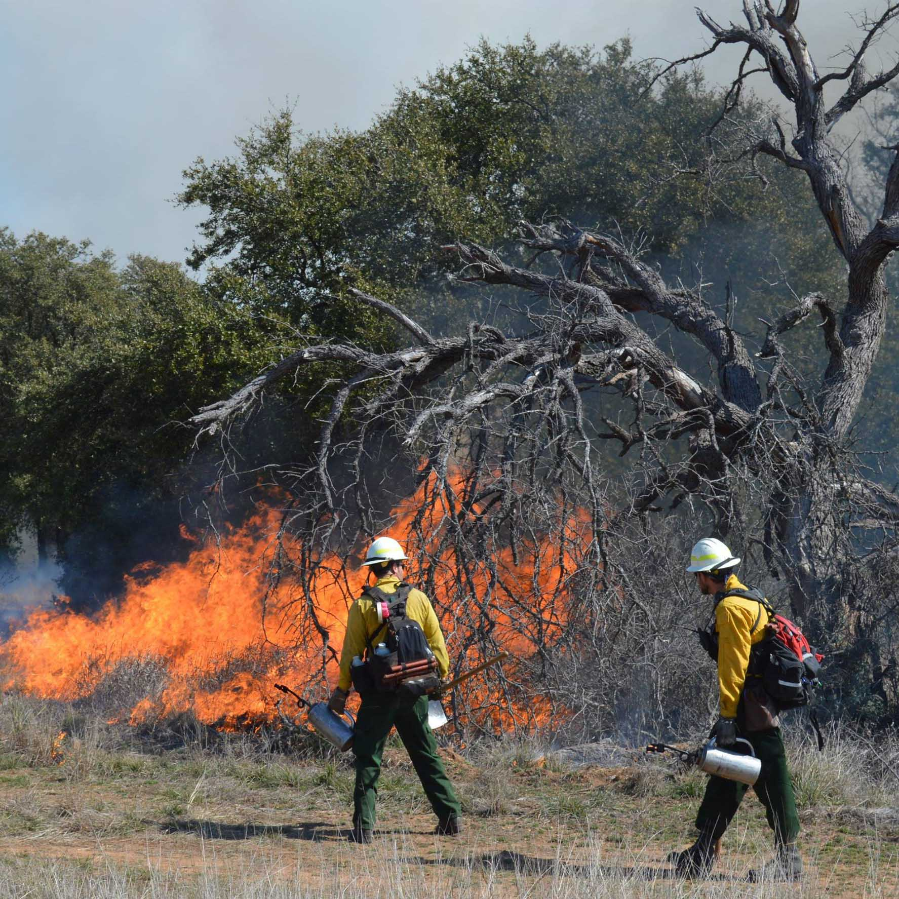 <p>    COLLEGE