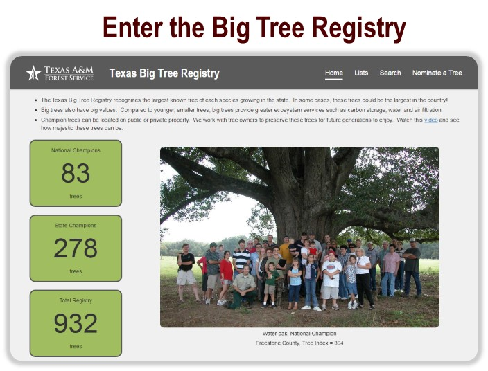 learn and explore big tree registry tfs