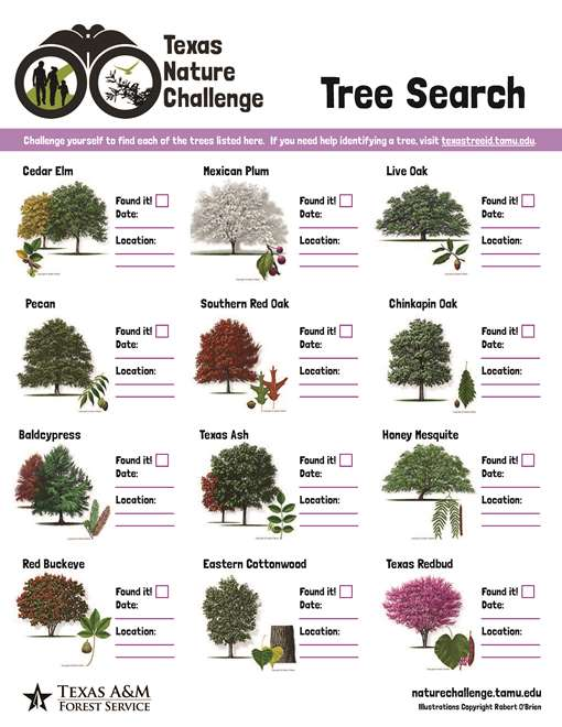 Learn and explore conservation education tree time tree search sciox Choice Image