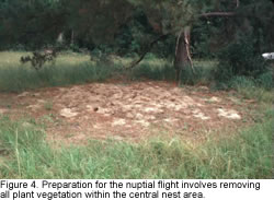 A photo of vegetation removed prior to nuptial flight