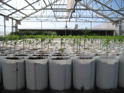 T3 - West Texas Nursery Greenhouse Seedlings