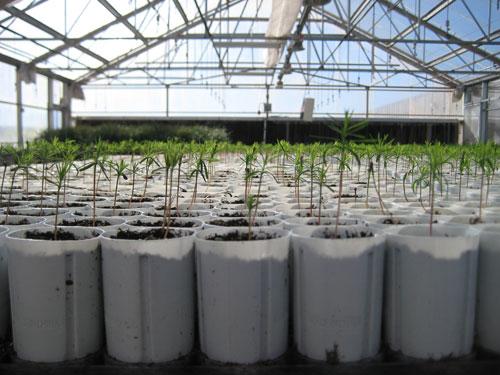 T3 West Texas Nursery Greenhouse Seedlings