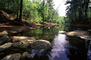 SCENIC PICTURE OF FORESTED STREAM