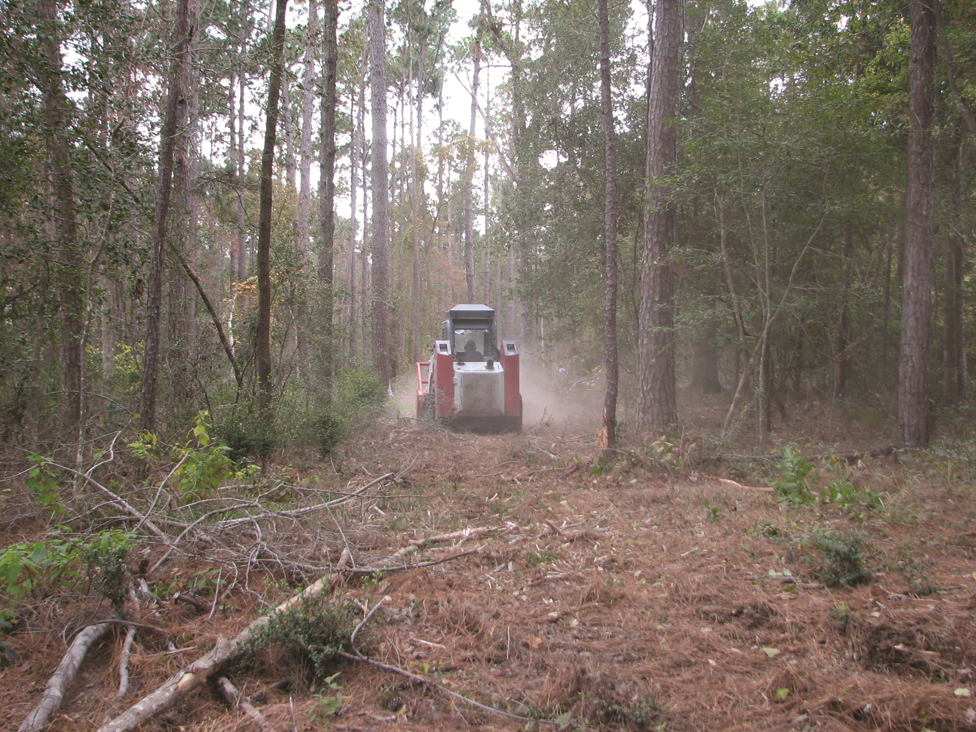 Mulching machine creating fuel break in the forest