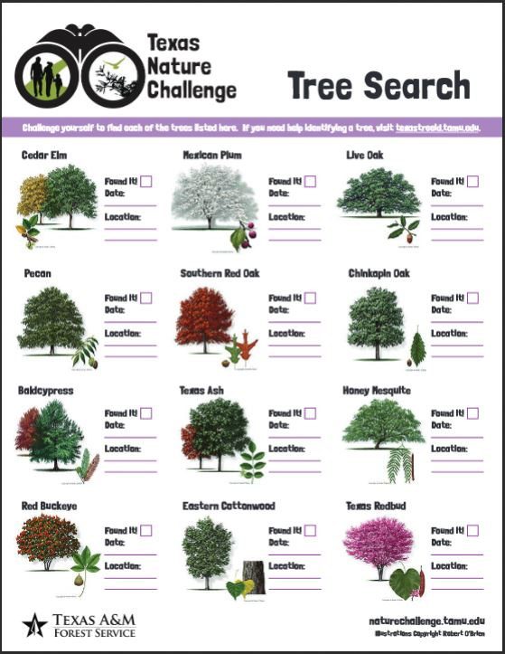 Tree Search poster