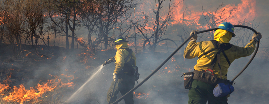 wildfires and disasters