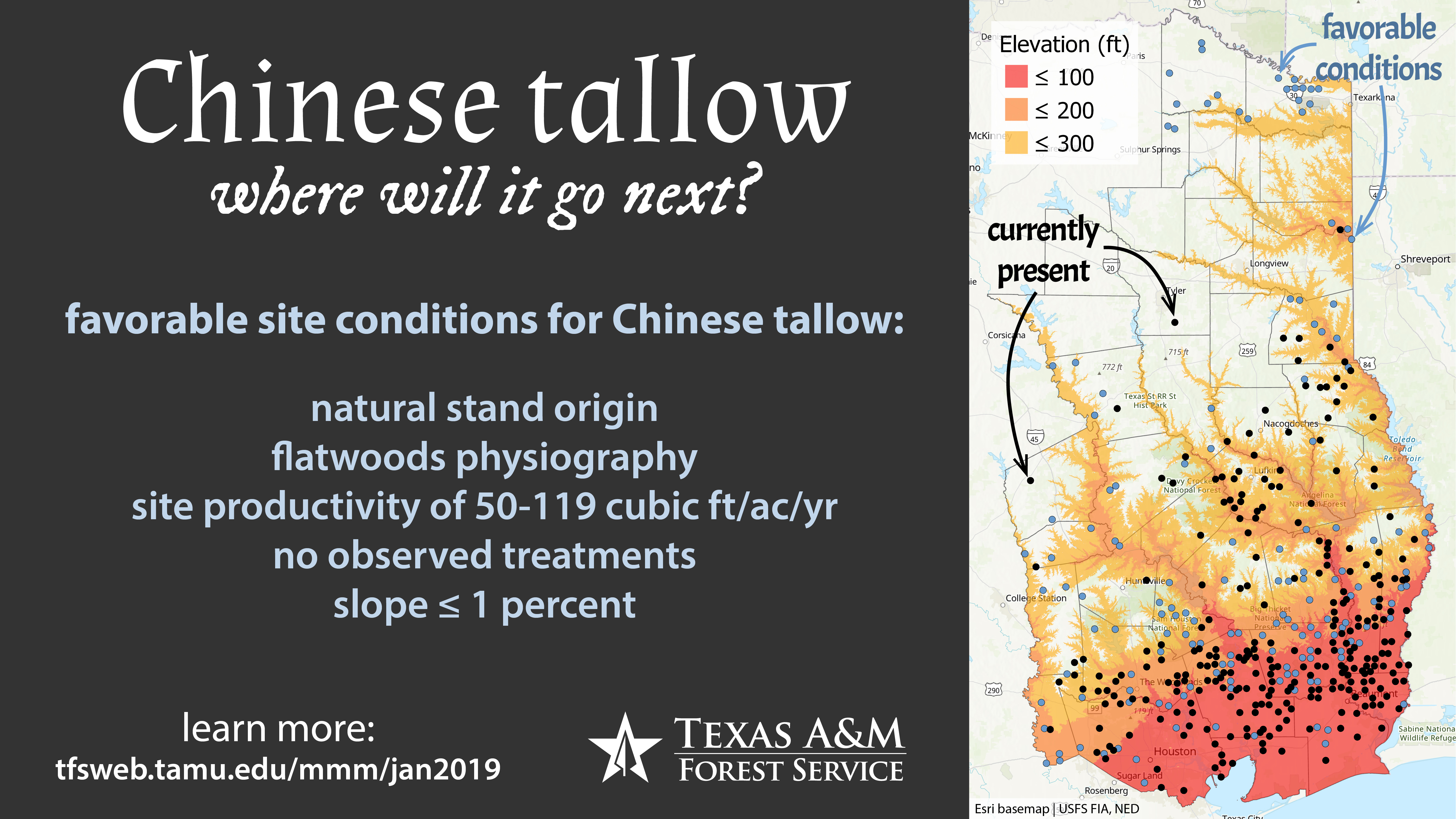 Chinese Tallow: Where Will It Go Next?