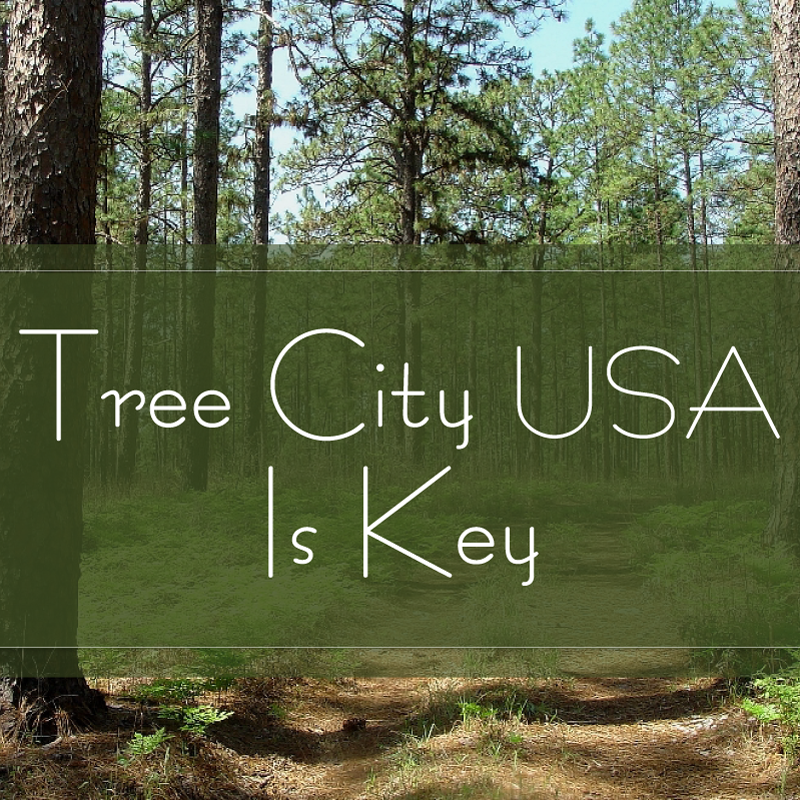 green trees and dark green banner title slide that says Tree City USA Is Key