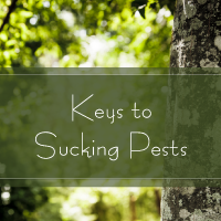 Trees are Key title Slide Keys to Sucking Pests