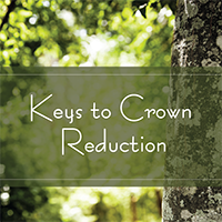 Keys to Crown Reduction