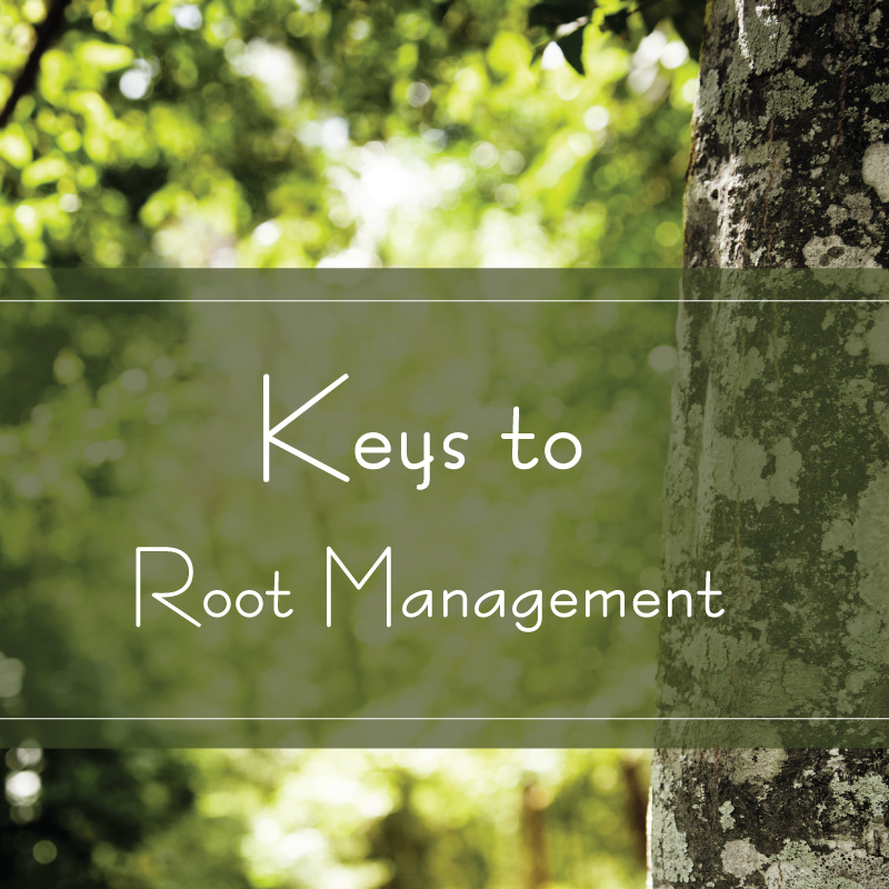 keys to root management