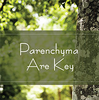 Parenchyma are key
