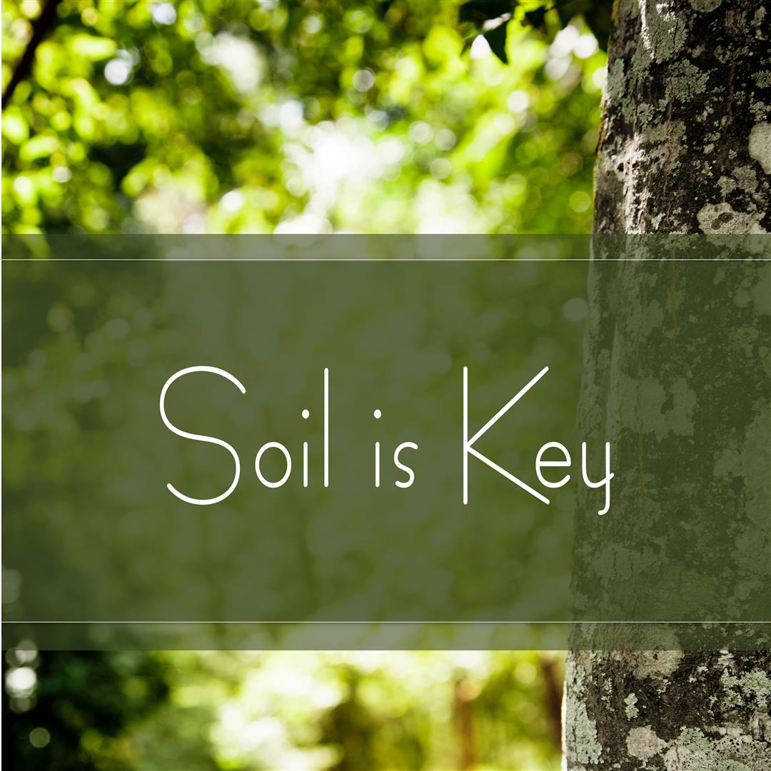 soil is key