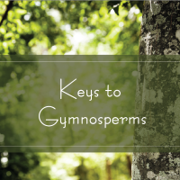 Keys to Gymnosperms TAK 241