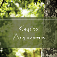 Keys to Angiosperms Trees Are Key