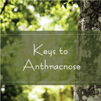 Trees Are Key 255 Keys to Anthracnose