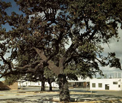 Auction Oaks-1969