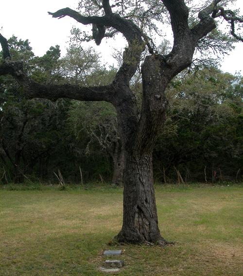 Kyle Hanging Tree Recent