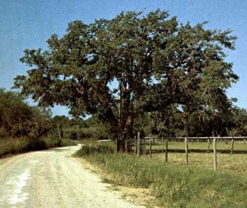 Live Oak County Charter 1969